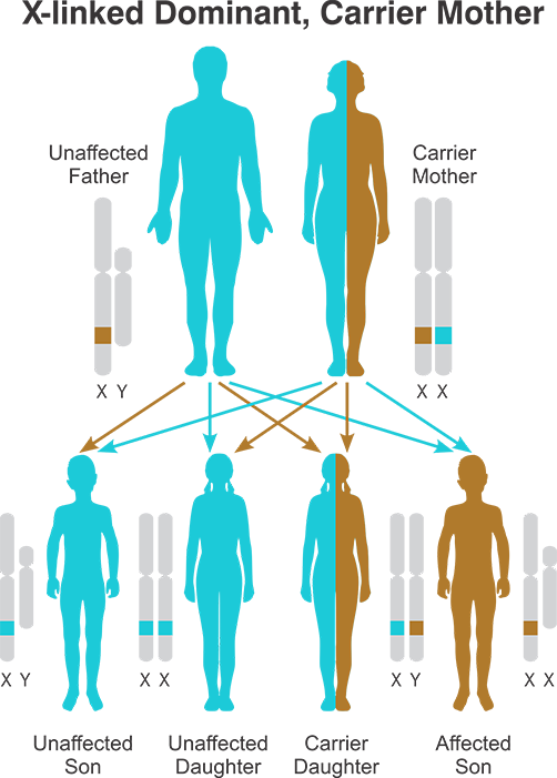 X-linked Recessive Carrier Mother